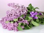 bouquet of purple lilacs