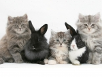 kittens & bunnies