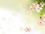 Plum Blossoms Soft
