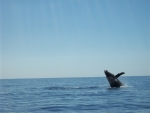 Spotting a whale while catamaran sailing