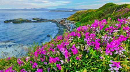 MEADOW from Vancouver Island - hills, rocks, grass, beautiful, beaches, se, mountains, flowers, nature, meadow