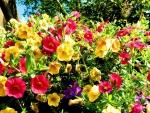 Petunias Garden
