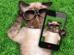 Cat selfie
