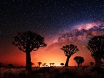 'night stars'....