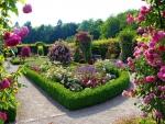beautiful rose garden