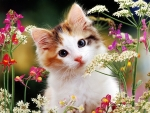 kitten in a wild flowers