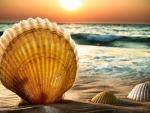 lovely seashell