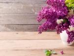 purple lilacs flowers