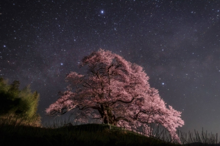 Summer Triangles over Japan - stars, japan, cool, space, fun