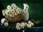 basket of lovely daisies
