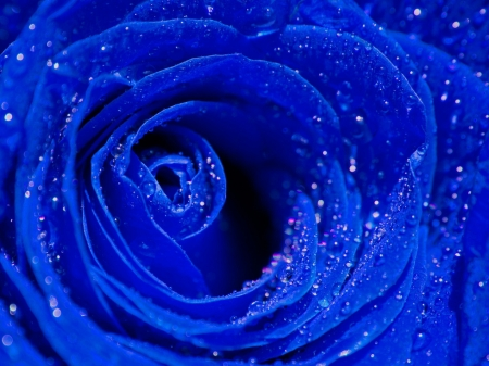 Wet Blue Rose - flower, wet, rose, blue