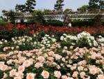 Great Rose Garden