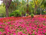 Blooming Park