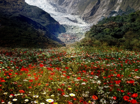 Flower Valley - daisies, Mountains, glacier, poppies, blossoms, colors, camomille
