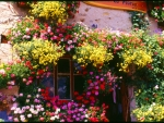 Pub Flowers, French Alps
