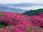 wildflowers field