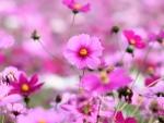 BEAUTIFUL PASTEL FLOWERS