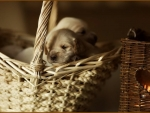 Basket of Joy ♥
