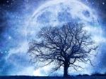 Magnificent full moon