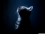 Kitten in the darkness