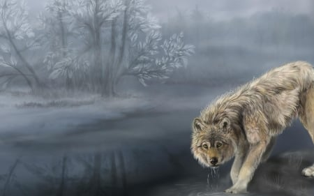 Wolves art riverside nature grey wolf drinking water animals