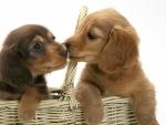 Fast kiss
