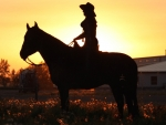 Sunrise Cowgirl