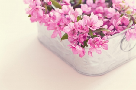 Pink flowers - flower, box, white, pink