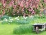 Springtime at garden