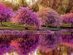 Blooming Springtime