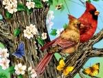 Pair of Cardinals f