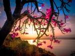 Desert Rose At Sunset