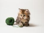 cute playing kitten