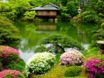 Pond tranqulity