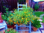 Backyard Flowers
