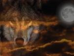 Wolf Sunset Moon