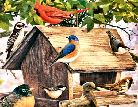 Birds at the Wooden Feeder F - feeder, robin, artwork, bluebird, animal, chickadee, painting, wide screen, sparrow, art, nuthatch, bird, avian, dove, wildlife, woodpecker, cardinal