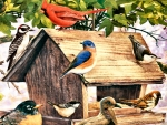 Birds at the Wooden Feeder F