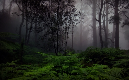 real scottish forest - forest, hd, stunning, wallpaper, real, scottish
