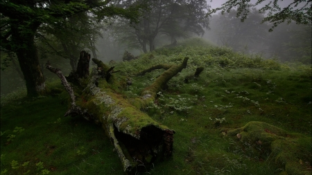 Real Scottish Forest 2 Forests Nature Background Wallpapers On