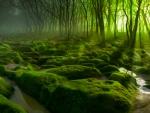 darkscape green light