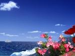 ~*~ Ocean ~*~