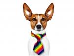 Dog with raibow tie