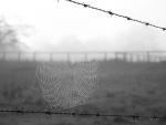 Spiders Webb