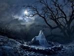 Serenade the Moon