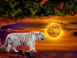 MOONRISE TIGER