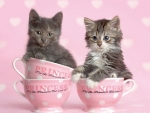 Cute teacups kittens