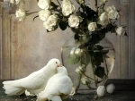 white roses and dove love