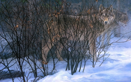 Wolves hiding - brown, wild life, winter, hiding, snow, grey, wolf, wolves, wild animals