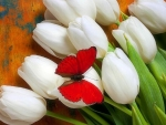 Butterfly on White Tulips